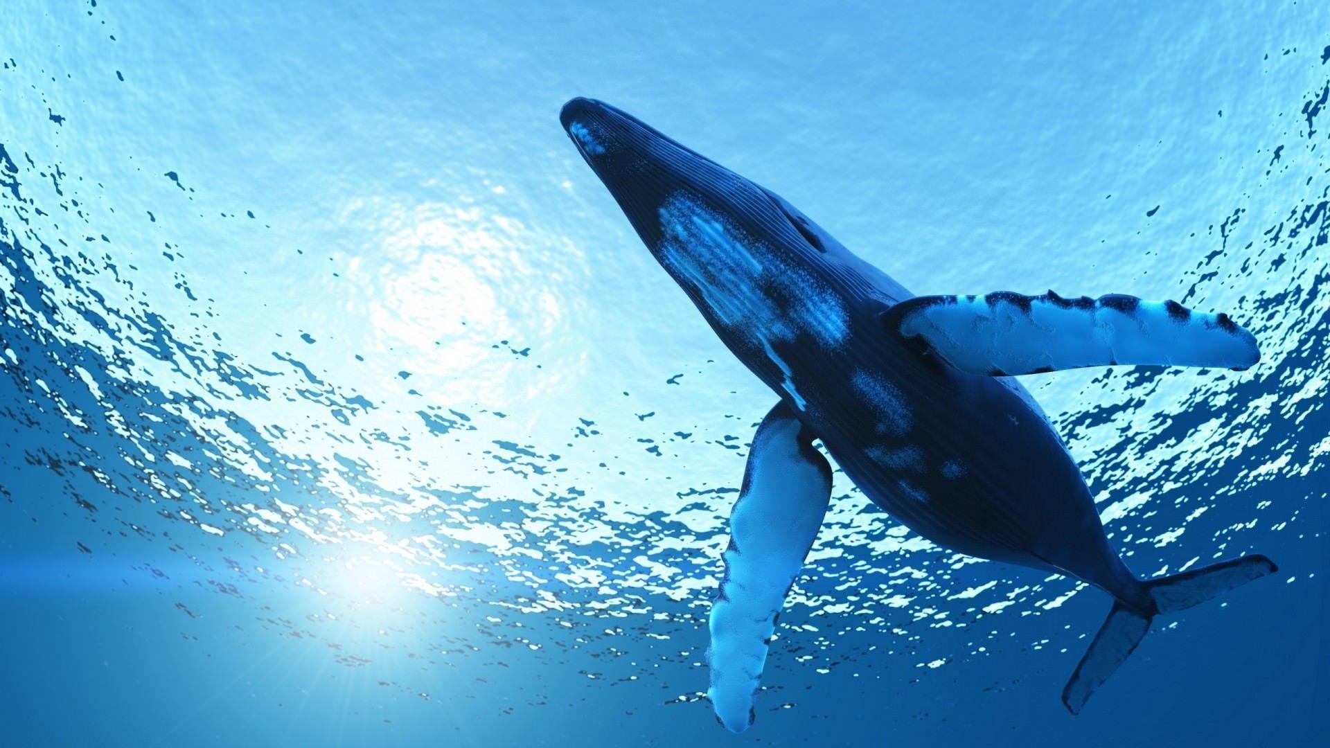 Il Blue Whale tocca anche Pescara, ragazzina in fin di vita