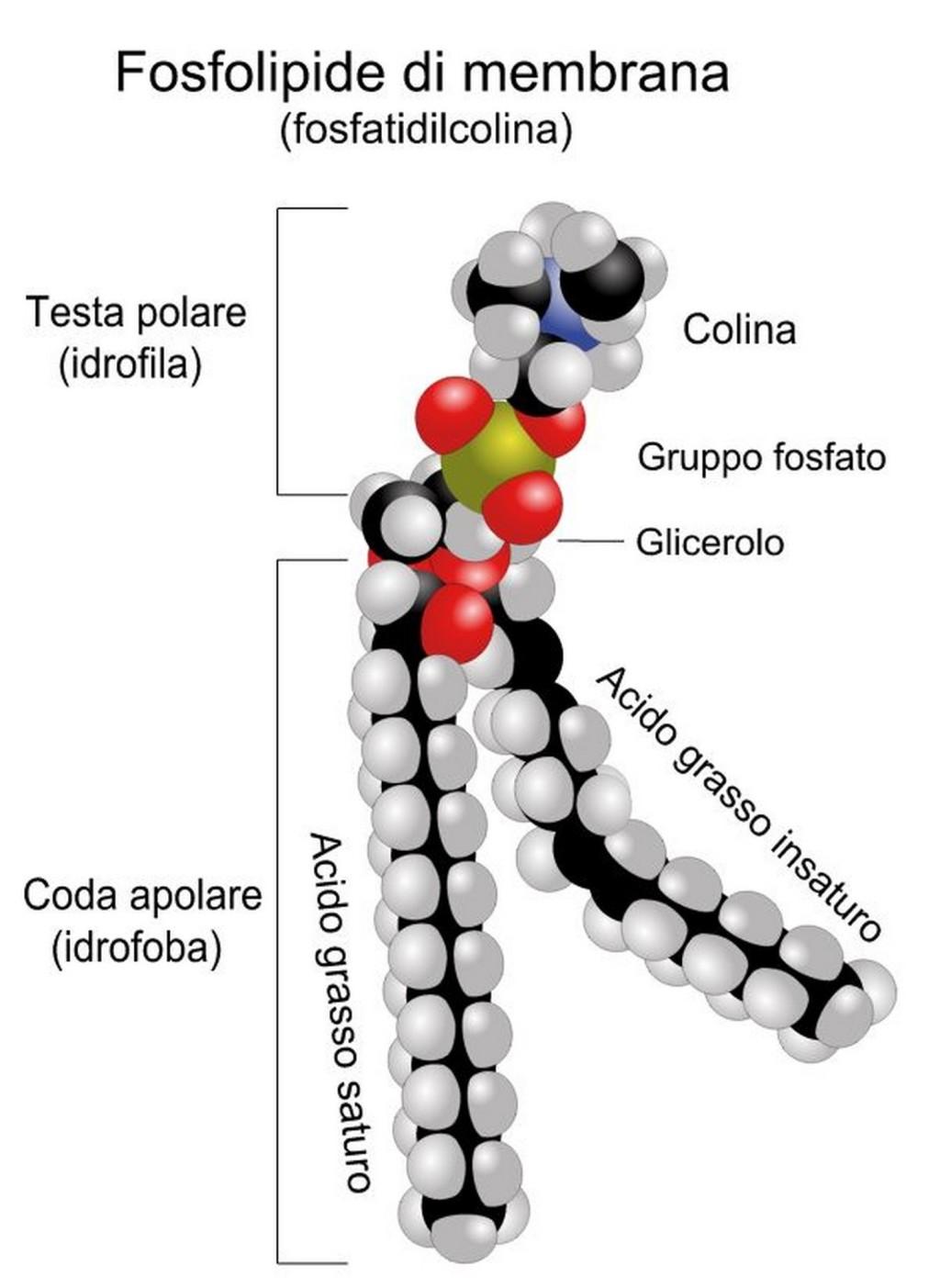 Liposomi nella cura del cancro per ottenere farmaci mirati