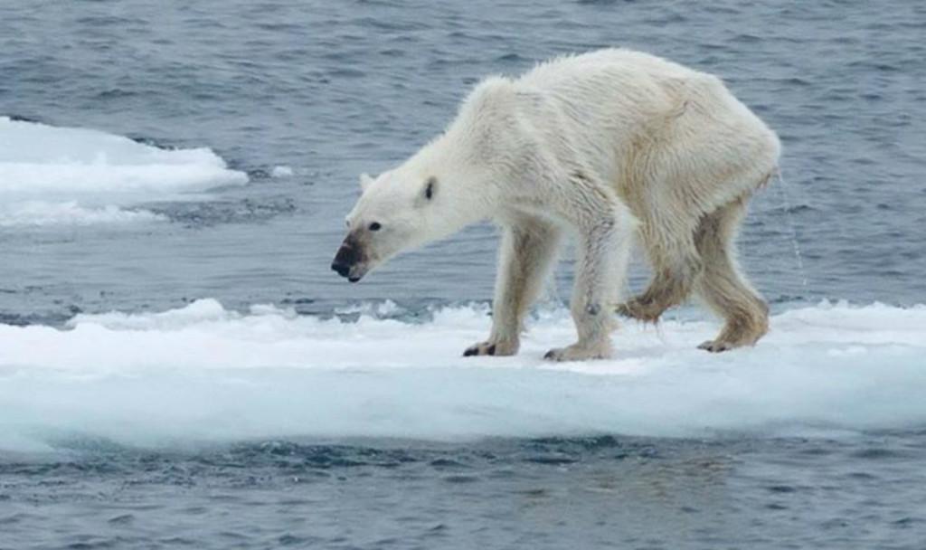 Permafrost cruciale per la lotta al cambiamento climatico - Tom's Hardware