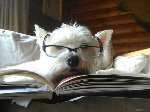 https://www.tomshw.it/files/2014/02/immagini_contenuti/53865/dog-glasses-smarty.jpg