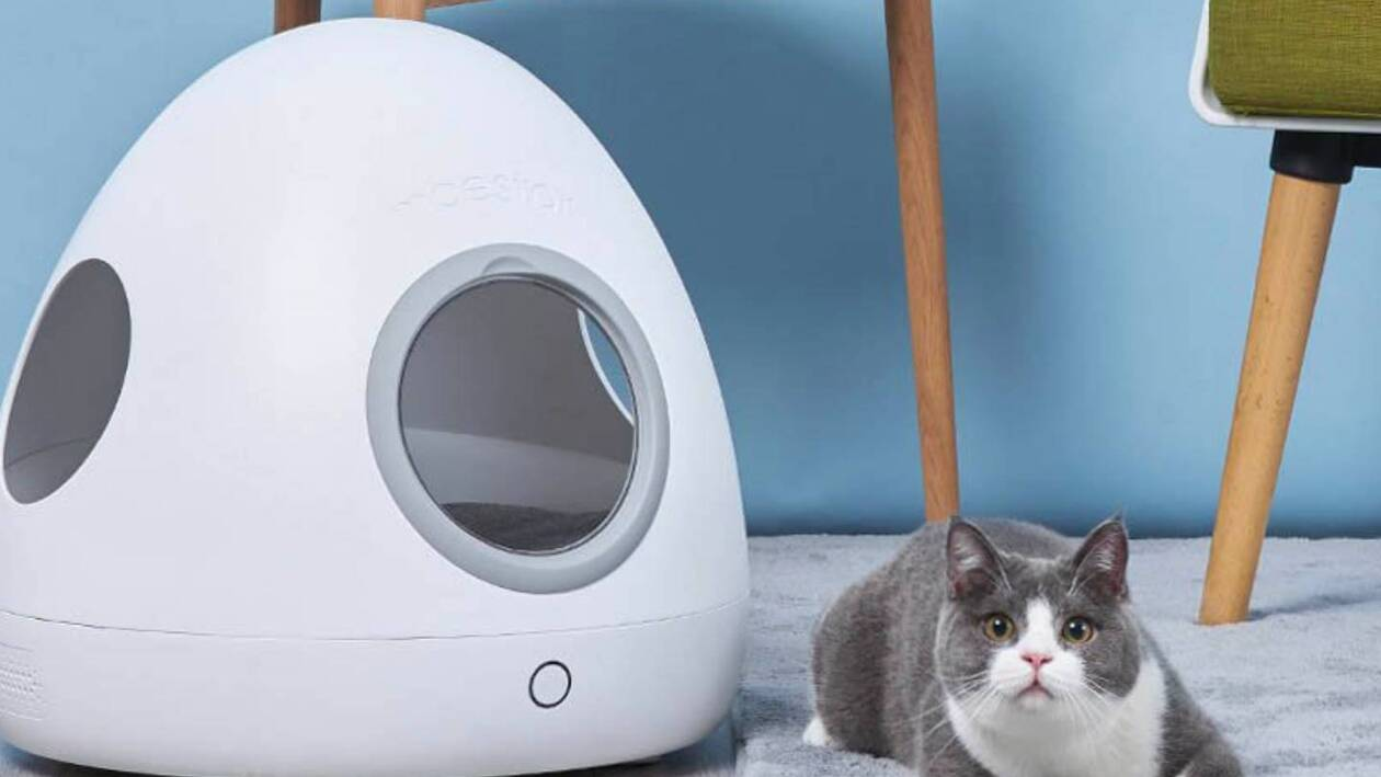 Cucce Piccole Per Cani xiaomi: ecco la cuccia smart per cani e gatti | mobilelabs
