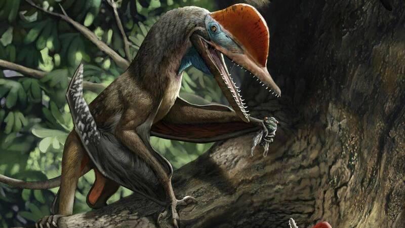 Monkeydactyl, a pterosaur with an opposable thumb?