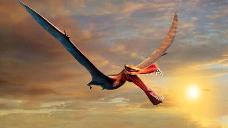 Dragon-like pterosaur discovered in Australia