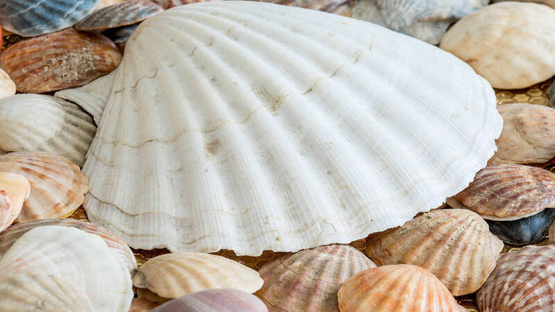 Adaptive protective clothing? we will get them by studying the shells